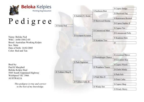 Beloka Ned Pedigree