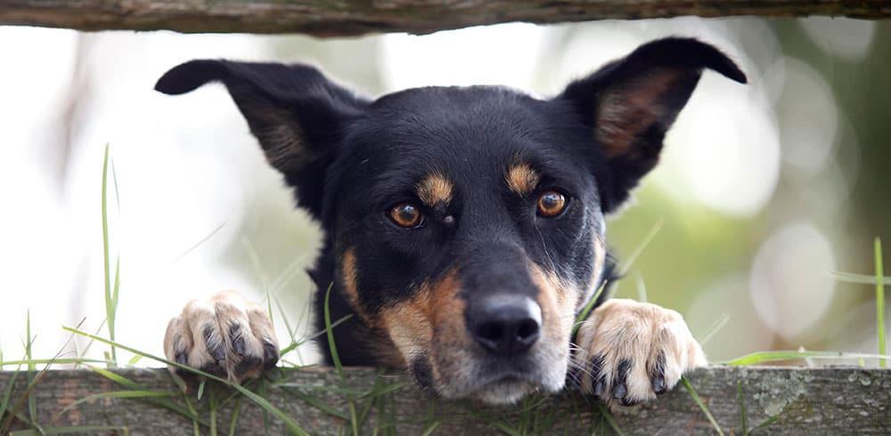 Beloka Kelpies - Working Dog Education