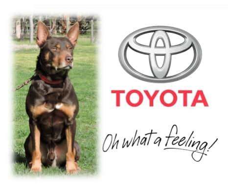 Tom in Toyota advertisement