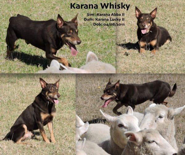 Karana Whisky